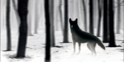 Rain Dogs von Adrian McKinty | © Suhrkamp Verlag